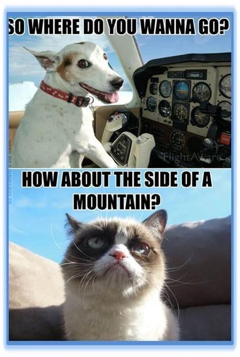 Sarcastic Cat Meme - 46 best one does not simply meme images on pinterest