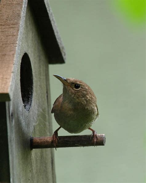 the importance of bird houses gundersen envision