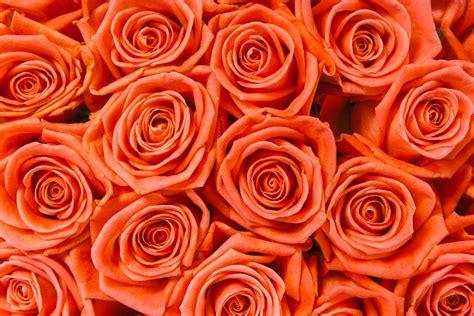 colore dei fiori significato qual 232 il significato dei fiori arancioni