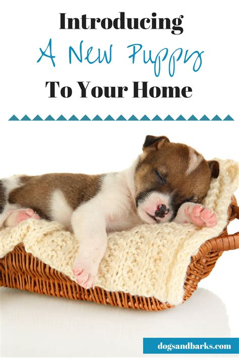 Introducing My New Puppy by Getting A New Puppy Tips On Introducing Your New