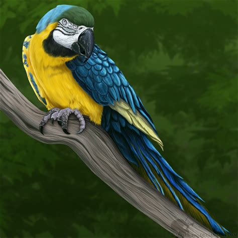 blue and gold macaw by nioell on deviantart
