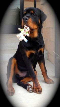 Him Kaos T Shirt Summer Time Dtg 1000 images about rottweiler names for boys and on