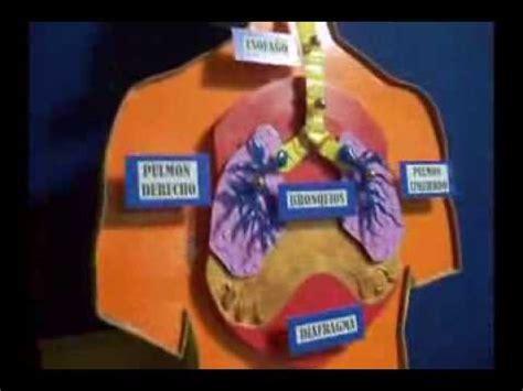 como hacer una maqueta del sistema respiratorio sistema respiratorio maqueta escolar youtube