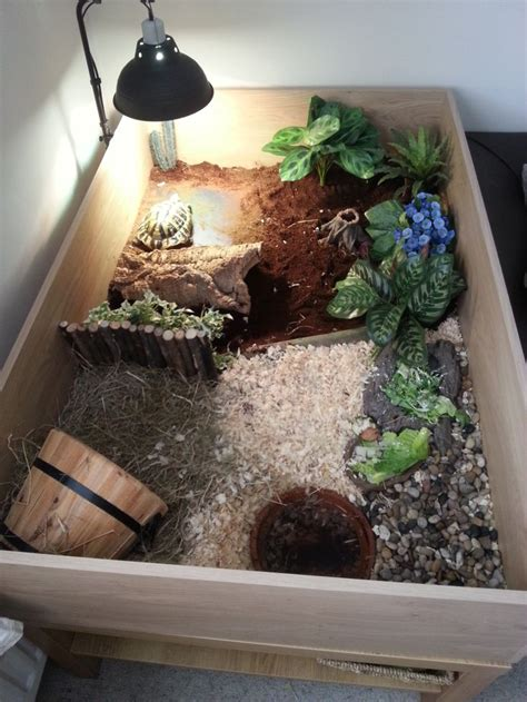 turtle decorations for home best 20 tortoise enclosure ideas on pinterest outdoor