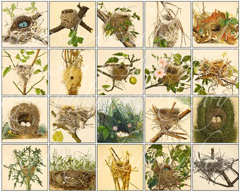 different types of birds nests