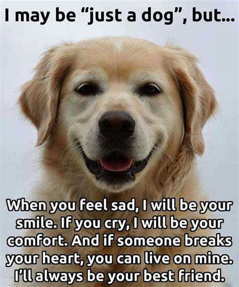 teaching humans to be s best friend without saying a word books best friend golden retrievers comic