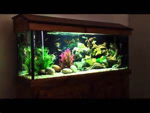 foot community tropical fish tank (6 months update)   YouTube