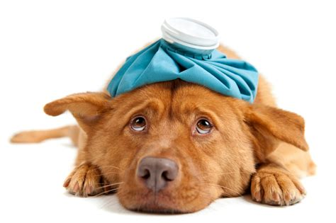 sick dogs puppy problems 5 tell tale signs that your pet might be sick