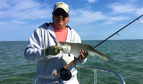 fishing report cape cod 2014 cape cod bay fishing reports salty cape