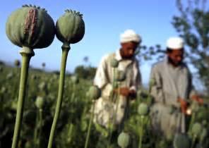 Opium opium causes symptoms treatment opium