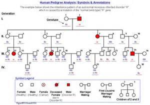 Pedigree Analysis Worksheet by Pedigree Analysis Worksheet Worksheets