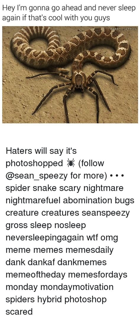 Best 25 Spider Meme Ideas - 25 best memes about spider meme and memes spider