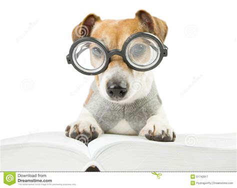 puppy studying studying www pixshark images galleries with a bite