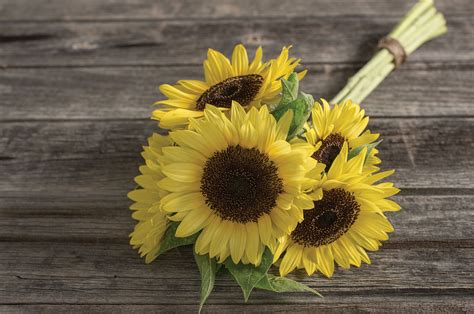images of sunflowers collection for free download