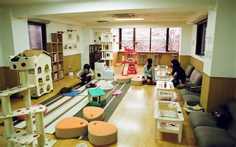 Home Business Ideas Japan Neko Kissas Descubriendo Las Cafeter 237 As De Gatos Conoce