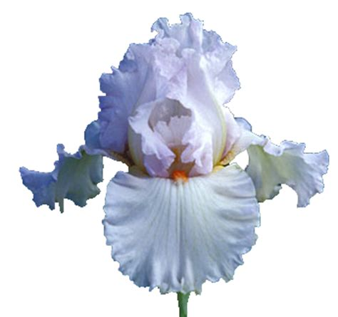 A Vase Of Roses Index Of Users Tbalze Flower Iris