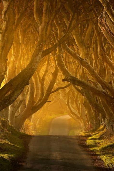imagenes re geniales tuneles de arboles geniales y hermosos im 225 genes taringa