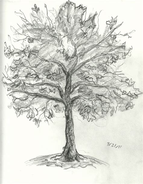 A Sketches Of Trees by Brandon Orden Tree Drawings
