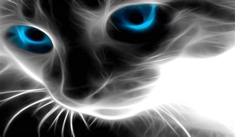 imagenes para fondo de pantalla gatos fondo pantalla fantasia gato