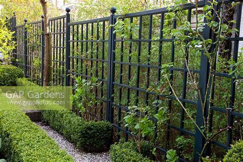 Black Trellis Garden Gap Gardens Black Painted Trellis And Buxus Box Edging
