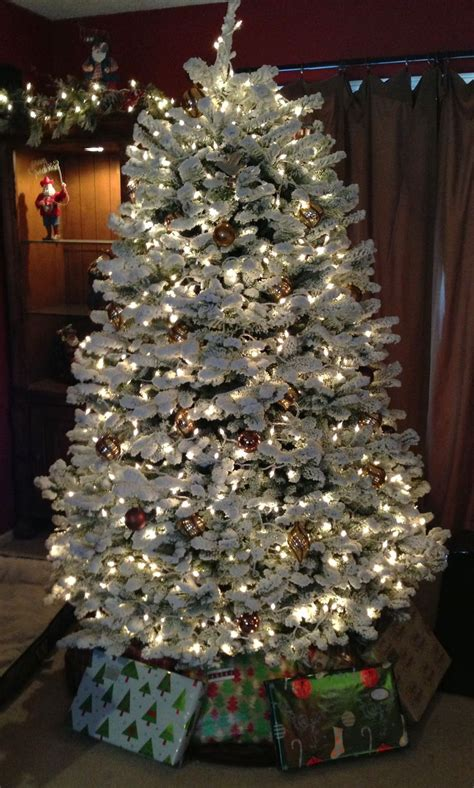 fir christmas tree ideas 7 best noble fir trees images on firs noble fir tree and