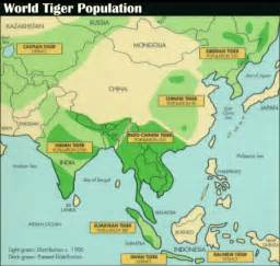 tiger map endagertigerinfo why killed tigers