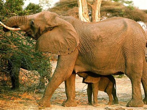 imagenes animales de africa imagenes de africa taringa