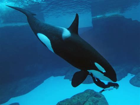 imagenes para fondo de pantalla del mar animales marinos fondo de pantalla de animales marinos