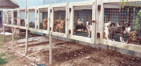 puppy mill statistics what is a puppy mill