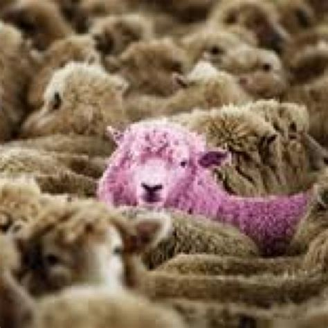 Sheep Pink 546 best images about counting sheep on lake district wool and babydoll sheep