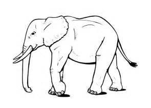what color is an elephant elephant coloring pages coloring pages