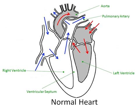 cardiac diagram diagram to label ks2 images