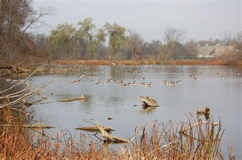 duck hunting from a boat in maryland duck duck goose waterfowl hunting options abound in
