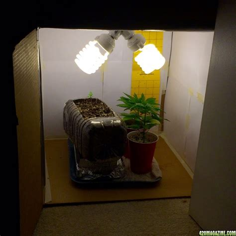 inexpensively cool  small grow box  magazine
