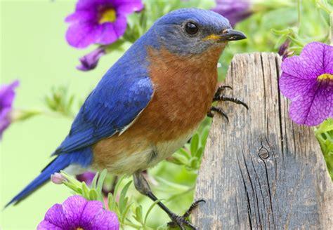 birds of east tennessee johnson pest control pest