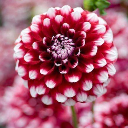 pretty plant names 50 plus belles fleurs du monde