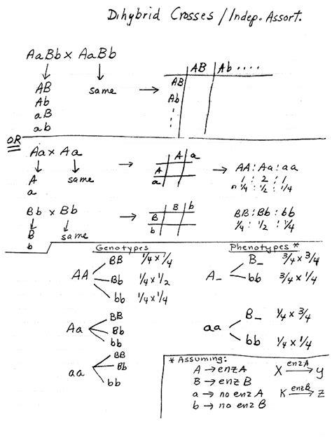 branch diagram genetics branch diagram genetics best free home design idea