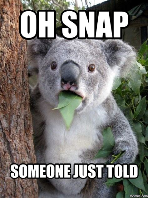 Oh Snap Meme - funny memes hot girls wallpaper