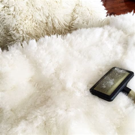 cleaning sheepskin rugs how to clean a sheepskin rug expert advice my green clean