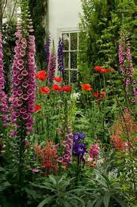 cottage garden flowers hollyhocks garden hollys hedges