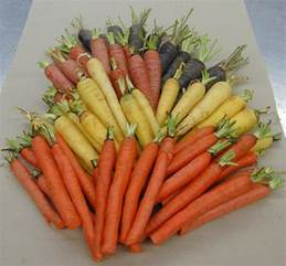 different colored carrots carrots 4 color bunched scientists with a m