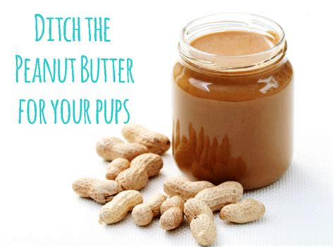 is butter bad for dogs why peanut butter is bad for your the diy