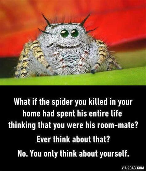 Memes About Spiders - the 25 best ideas about spider meme on pinterest crazy