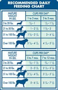 mini english bulldog vs english bulldog wesharepics