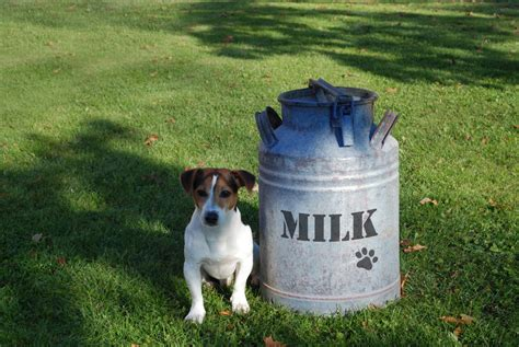 can dogs dairy is dairy a food for dogs yearbook