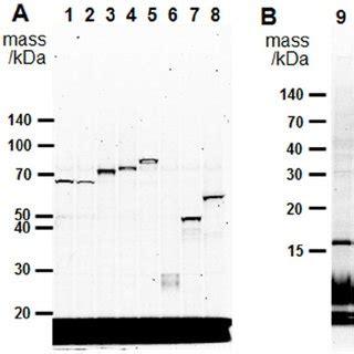 flow chart   preparation  microsomes  sf