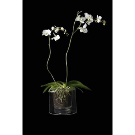 pot orchid 233 es cityplantes growshop en ligne