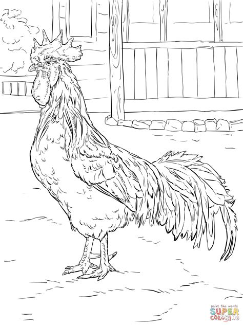 brown leghorn rooster coloring page free printable