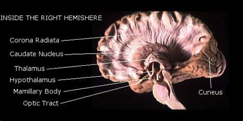 images   brain