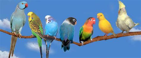 libro drle doiseau oiseaux